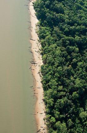 Végétation de mangrove sur le littoral près de Cayenne.
