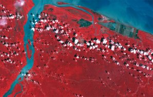 Côte de la Guyane au niveau de l'embouchure de la Mana en 1999